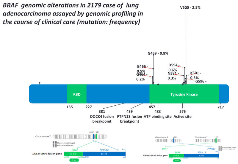 BRAF Genomic Alterations In 2179 Case Of Lung Adenocarcinoma Assayed By  Genomic Profiling In The Course Of Clinical Care (mutation: Frequency).