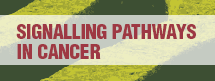 Signalling Pathways in Cancer 2016