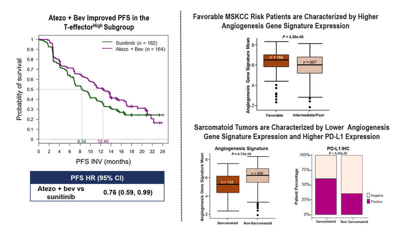 IMmotion151 molecular correlates atezolizumab plus bevacizumab vs sunitinib  mRCC Rini